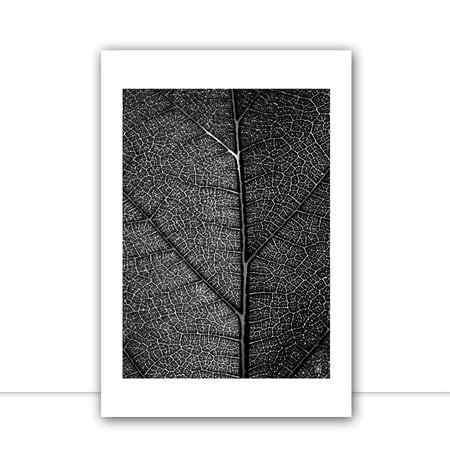 Plants II por Joel Santos