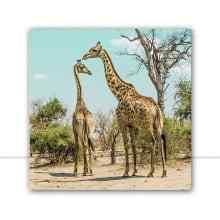 Africa por Patricia Schussel Gomes