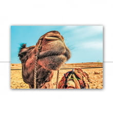 Jaisalmer IV por Patricia Schussel Gomes