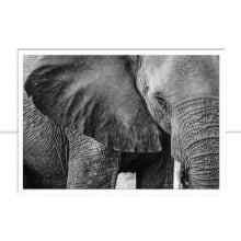 Africa II P&B por Patricia Schussel Gomes