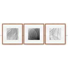 Composição Leaf veins 1,3,2 por Juliana Bogo