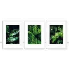 Conjunto de quadros Wet Nature por Joel Santos