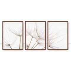 Conjunto de quadros Dandelion Tríptico Sepia por Juliana Bogo
