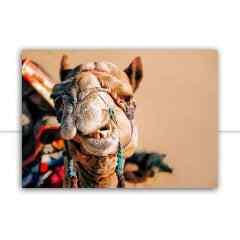 Quadro Camelo indiano por Patricia Schussel Gomes