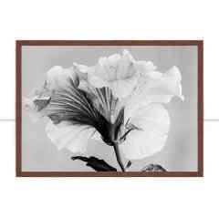 Quadro Flor de Hibisco Orvalhada por Edmoraes