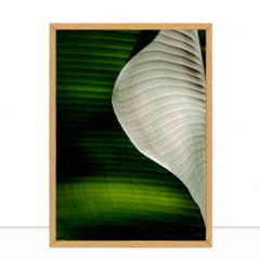 Quadro folha de bananeira 1 por Edmoraes