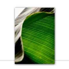 Quadro folha de bananeira 2 por Edmoraes