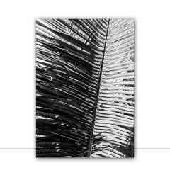 Quadro Folhagem de palmeira por Edmoraes
