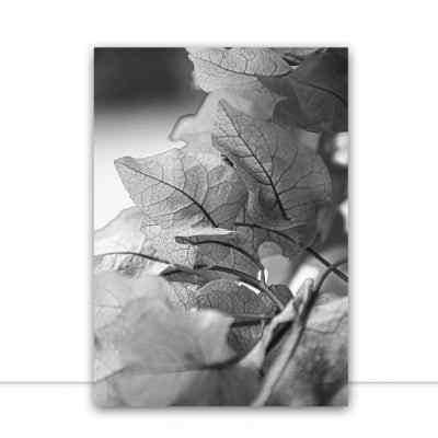 Quadro Folhas Monocromatica por Rafael Campezato