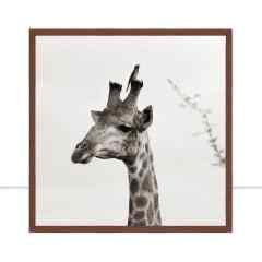 Quadro Girafa PB Q por Marcelo Baldin & Sâmia Munaretti
