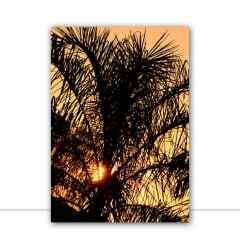 Quadro Palmeira em contraluz por Edmoraes
