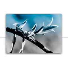 Quadro Pequenas flores azuis por Edmoraes